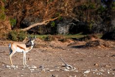 Oranjemund is not just an old diamond mining town - it is a fascinating town that is rich in history & should be on your bucket-list when visiting Namibia Brown Hyena, Dry Bones, Diamond Mines, Best Kept Secret, National Parks, De Beers