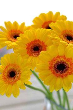 Pretty as a daisy Happy Flowers, My Flower, Fresh Flowers, Pretty Flowers, Flower Power, Wild Flowers, Amazing Flowers, Beautiful Roses, Daisy