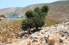 Hiking around the island of Pserimos in Greece. Many surprising little treasures to uncover in this mostly bare and barren island. Kos, Islands, Greece, Hiking, Holidays, Water, Outdoor, Greece Country, Walks