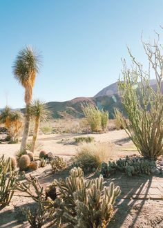 Inside a modern hacienda-style home located in the California desert. Read how the designer transformed this space into a modern bohemian oasis Boho Glam Home, Desert Dream, Desert Life, Spanish Revival, Spanish Colonial, Spanish Style, Desert Aesthetic, Hacienda Style Homes, Westerns