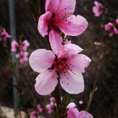 #primaverapallarsjussa