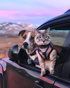 """64k Likes, 551 Comments - Henry + Baloo (@henrythecoloradodog) on Instagram: """"The meowtains are calling and I must go """""""