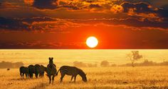 Affordable African Safari with Zara Tours Adventures