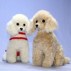 ranran | Rakuten Global Market: General plush / poodle / plush toy poodle and dog-loved the old traditional style! Style cut toy poodle plush