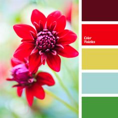 bright red, color of old gold, color of wine, color palettes for decoration, color solution, colors for decoration, designer palettes, green sea, mustard color, pastel green, periwinkle color, Red Color Palettes, sangria color,