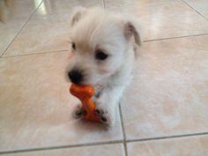 My baby Linus