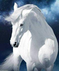 A beautiful horse to brighten your day! (not my photo) Cheryl EECustomHorseS - Schöne pferde - Cute Horses, Pretty Horses, Horse Love, Horse Photos, Horse Pictures, Animal Pictures, Beautiful Creatures, Animals Beautiful, Cute Animals