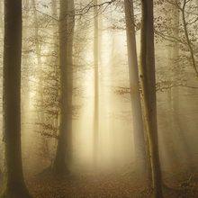 Fototapeta - Into the Trees