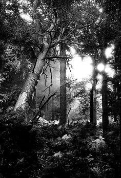 Early morning sunlight burns through a thin mist at Nursery Common in north Staffordshire in 1983. Black & white photograph from a 35mm film negative original shot on Ilford HP5. Available on canvas and other options. #Photography #Photo #blackandwhite