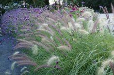 LAGA Bayreuth 2016 - Petra Pelz Landschaftsarchitektur Petra, Gras, Plants, Landscaping, Bayreuth, Private Garden, Summer Flowers, Modern Gardens, Landscape Diagram