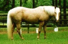 The Heart of a Horse Horse Poems, Horses, Heart, Animals, Animales, Animaux, Animal, Animais, Horse