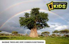 botswana-ecard-kids.jpg