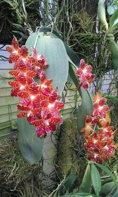 Orchids beauty ♥️