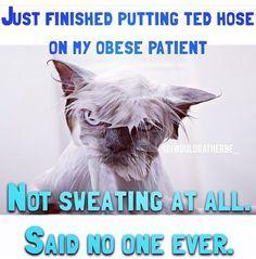 said no nurse ever. Rn Humor, Medical Humor, Nurse Humour, Nurse Jokes, Funny Nurse Quotes, Night Shift Nurse, Nurse Problems, Hospital Humor, Nurse Life
