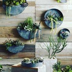 pallet wall, reclaimed wood, flower pots