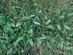 Learn how to identify and remove common weeds that may be taking over your lawn and garden spaces with this gallery.