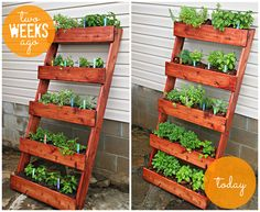 Diy Herb Garden Update Digin Ad Home Depot