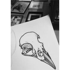 * Bird skull *