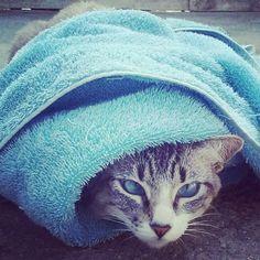 G.A.R.R.A. - Grupo de Ação, Resgate e Reabilitação Animal: Zarolha uma Gatinha muito especial!