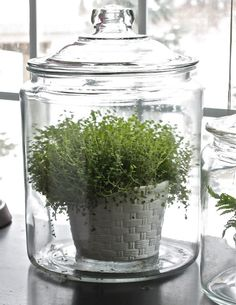 Use covered jars (often meant to be kitchen canisters or cookie/candy jars) for small plants. Very attractive and good for the plant!