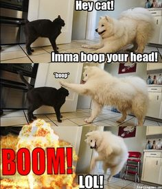 Hey cat! Imma boop your head! -