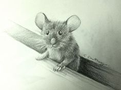 mouse drawing by chattravadee What a wonderful draw Animal Sketches, Animal Drawings, Cute Drawings, Pencil Drawings, Art Sketches, Guache, Art And Illustration, Wildlife Art, Pictures To Draw
