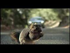 #bridgestone screaming #squirrel ad from the 2008 #superbowl