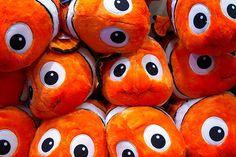 25 Best Kayla Nemo Party Ideas Images