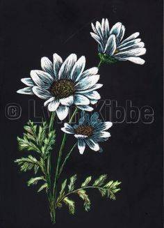 Daisies5, scratchboard (available)