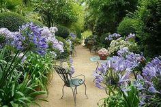 Garden Design One: Awesome agapanthas!!! Bebe'!!! Lovely garden area!!!