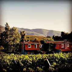 The family winery G. Kokotos is a true gem located in a small distance from the center of Athens! Follow us to enjoy a relaxing day near the Attican nature and get to know with its exceptional wines! A part of the GW Attica Yellow wine routes 😉  #gw_winetrips #winedestinations #winetravel #greekwineries #winelovers #attica #greece #greekwine #kokotosestate Attica Greece, Relaxing Day, Gw, Wineries, Ancient Greek, Tour Guide, Athens, Distance, Vineyard