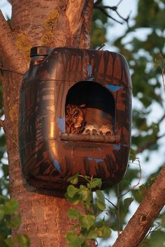 Owl house and babies:) by Gloz000