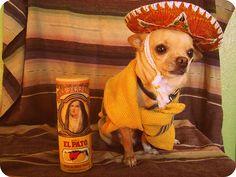 LOL LOL LOL!!!!!!!!!!- Reminds me of my good friend Kenzie's Dog Lucy!