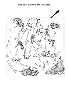 Food web coloring sheet | scope of work template