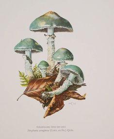 Art And Illustration, Illustration Inspiration, Illustrations, Flora Vintage, Vintage Prints, Botanical Drawings, Botanical Prints, Mushroom Pictures, Mushroom Art