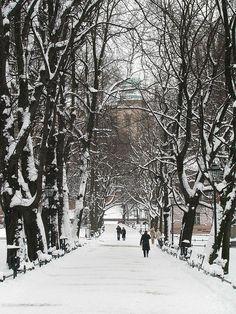 A road to the Wawel Hill... Planty along Straszewskiego Street, Cracow.