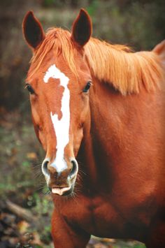 how to get a mare to accept an orphan foal