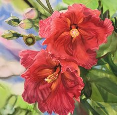 In The Tree Top by Colleen Sanchez, Watercolor, 22 x 22 Watercolor Artists, Watercolour Painting, Tree Tops, Seascape Paintings, In The Tree, Tropical Flowers, Hibiscus, Hawaii, Original Paintings