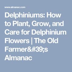 Delphiniums: How to Plant, Grow, and Care for Delphinium Flowers   The Old Farmer's Almanac