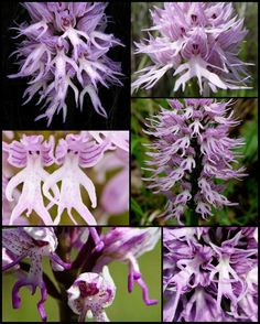 """I waaaant oonne. -M 