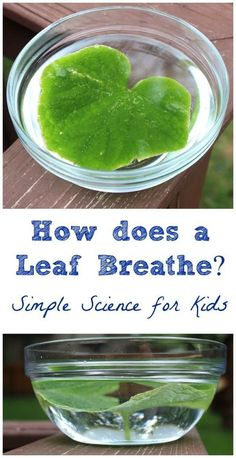 Simple science experiment that shows kids how leaves give off oxygen -- awesome how they can actually SEE this!