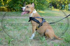 Super #Light-Weight Designed #Amstaff #Dog #Harness