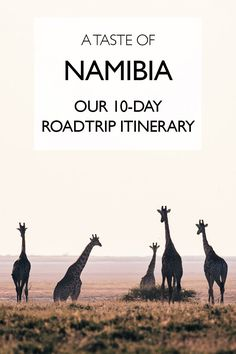A Taste Of Namibia: Our Namibia Roadtrip Itinerary - The Sandy Feet