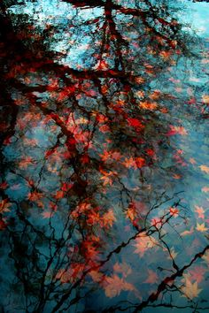The reflection of Autumn as leaves float on a pond... lovely.