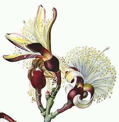 desenho botanico - Pesquisa Google