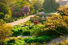 RHS Garden Wisley - The Long Ponds.