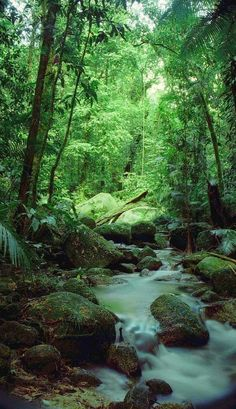 The Daintree, Queensland, Australia-This is a tropical rain forest region, occupying 12,000 square kilometers and growing right to the edge of the sea. It Includes a national park, as well as some privately owned lands. It is the home for more than 90% of Australia's bat and butterfly species, next to 12,000 species of insects.