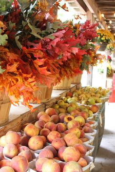 Hello Everyone! I hope you are all having a great week. I wanted to share a few pictures with you of my favorite place to buy produce. Bountiful Harvest, Fall Harvest, Harvest Market, Bless The Food, Fruit Stands, Best Pumpkin, Farm Stand, Delicious Fruit, Fruits And Veggies