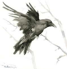 Flying Crow, Raven, Original watercolor painting, 12 x 12 in, crow lover art, raven lover, black and white, raven, American Raven
