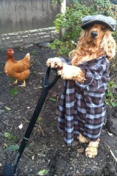 This dog who is also a farmer.